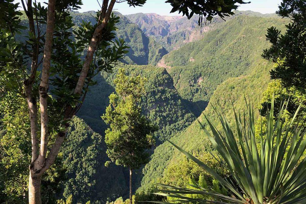 Los Tilos Barranco La Palma