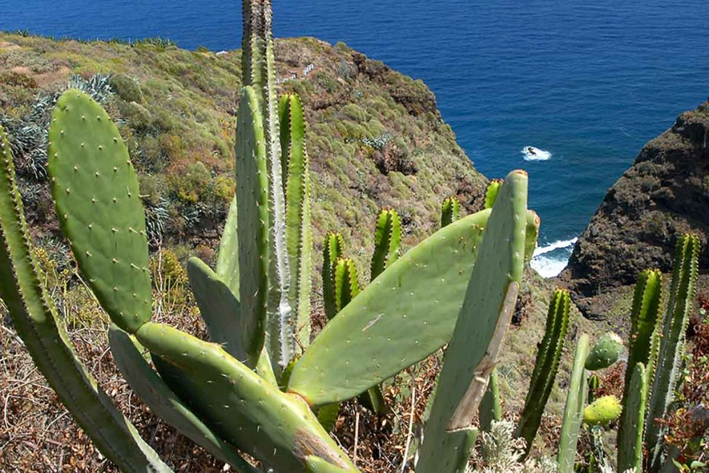 Boque-encantado-La-Palma-caminata-barranco nogales