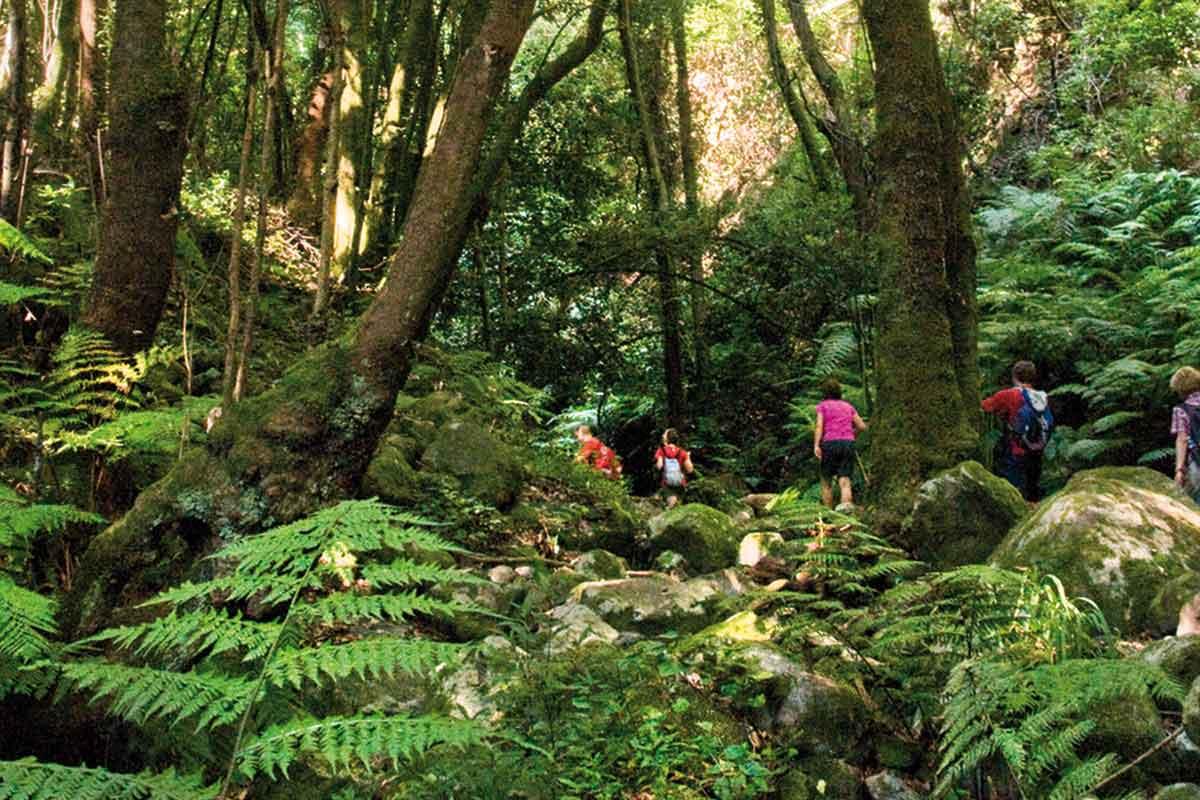 Bosque prehistorico en el Cubo de La Galga La Palma