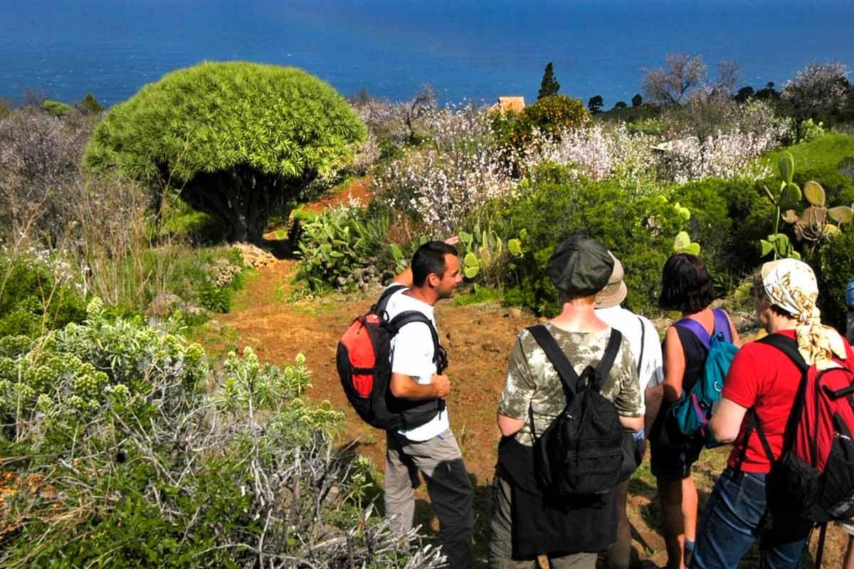 Rutas de senderismo en La Palma por los dragos de Las Tricias