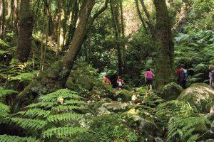 Tenerife rutas de senderismo organizado con guia por Anaga y en el Bosque de Las Mercedes