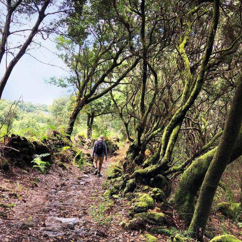 Abstieg vom Niquiomo - der Berg in Marzo, La Palma