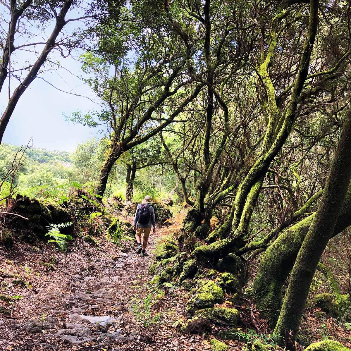 Downwars to Niquiomo - la montaña en Marzo, La Palma