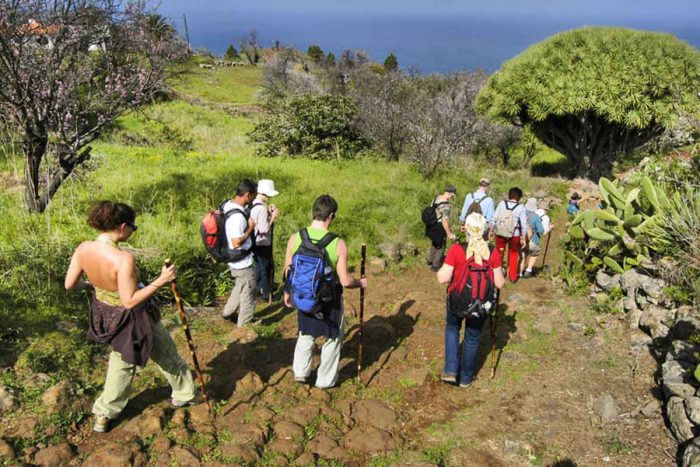 Caminata a los dragos y cueva buracas en las Tricias
