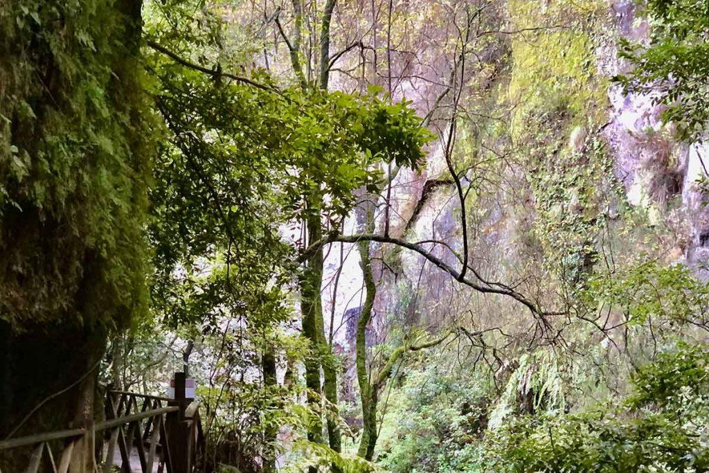 Bosque de laurisilva en Los Tilos Islas Canarias